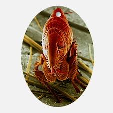SEM of a cat flea - Oval Ornament