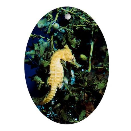 White's sea horse - Oval Ornament