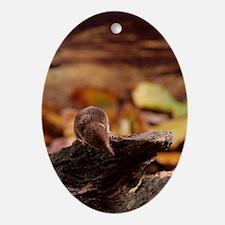 Pygmy shrew - Oval Ornament