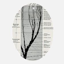 Human evolution - Oval Ornament