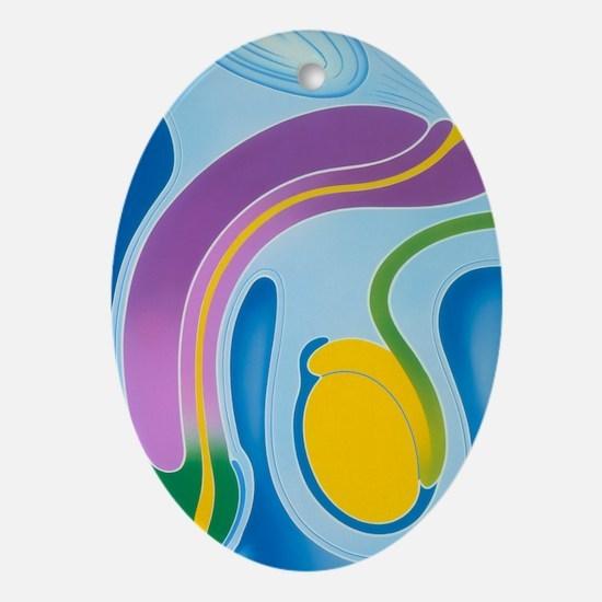 Artwork of male genitalia (penis - Oval Ornament