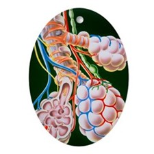 nd alveoli - Oval Ornament