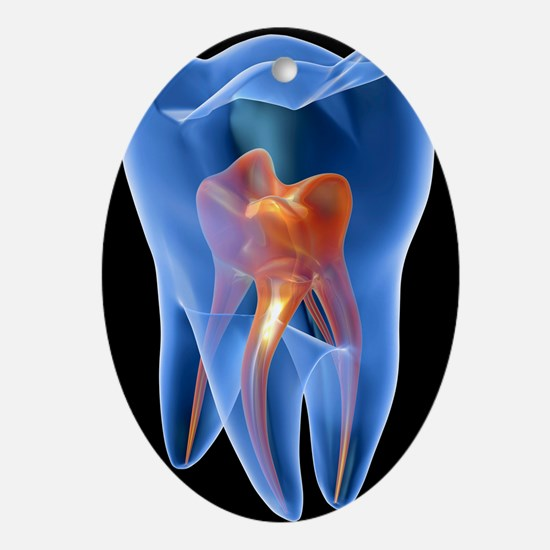 Molar tooth - Oval Ornament