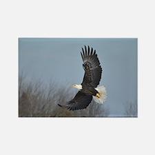 Bald Eagle soaring Rectangle Magnet