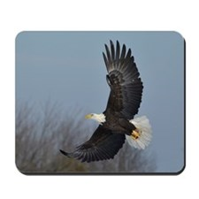 Bald Eagle soaring Mousepad