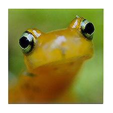 Salamander Tile Coaster