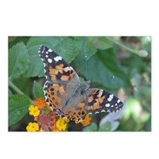 Butterfly: Painted Lady Postcards