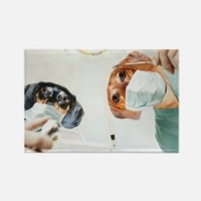 Dentists Doxies Rectangle Magnet