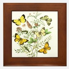 French Butterflies Framed Tile