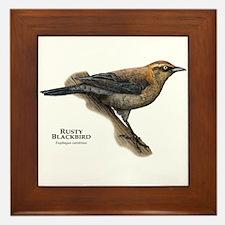 Rusty Blackbird Framed Tile