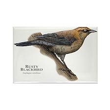 Rusty Blackbird Rectangle Magnet