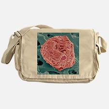 Calcareous phytoplankton, SEM - Messenger Bag
