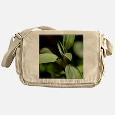 Sage (Salvia officinalis) - Messenger Bag