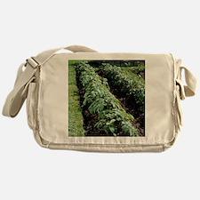 Organic potato plants - Messenger Bag