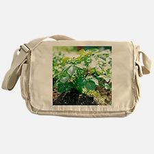 Potato plant - Messenger Bag