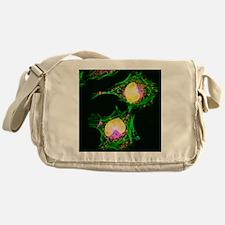 HeLa cells, light micrograph - Messenger Bag