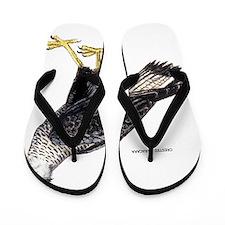 Crested Caracara Bird Flip Flops