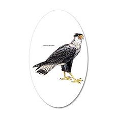 Crested Caracara Bird 35x21 Oval Wall Decal
