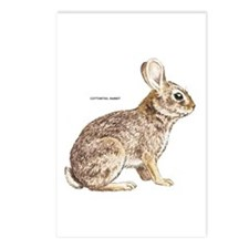 Cottontail Rabbit Postcards (Package of 8)