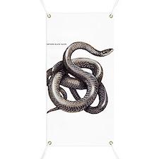 Northern Black Racer Snake Banner