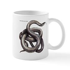 Northern Black Racer Snake Mug