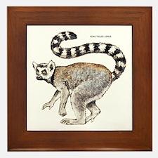 Ring-Tailed Lemur Framed Tile