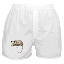 Opossum Animal Boxer Shorts