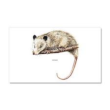 Opossum Animal Car Magnet 20 x 12
