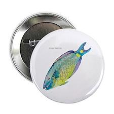 "Stoplight Parrotfish 2.25"" Button (10 pack)"
