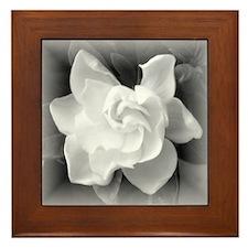 Gardenia Blossom Framed Tile