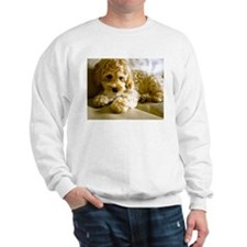 The Cockapoo Puppy Sweatshirt