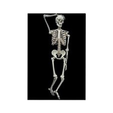 White skeleton Rectangle Magnet