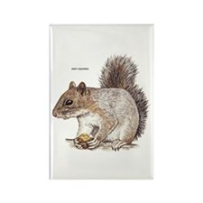 Gray Squirrel Animal Rectangle Magnet (100 pack)