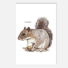 Gray Squirrel Animal Postcards (Package of 8)