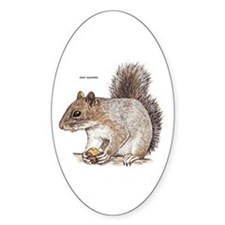 Gray Squirrel Animal Decal