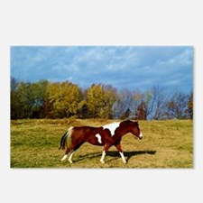Running Horse Postcards (Package of 8)