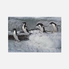 Penguin follow my leader Rectangle Magnet