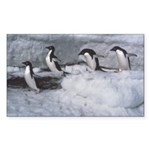 Penguin follow my leader Rectangle Sticker