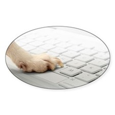 Dog's paw on computer keyboard Decal