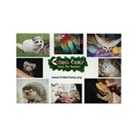 Critter Camp! Rectangle Magnet (10 pack)