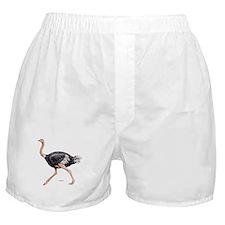 Ostrich Bird Animal Boxer Shorts