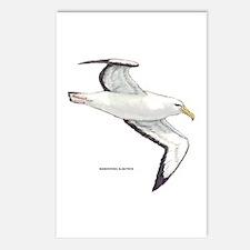 Wandering Albatross Bird Postcards (Package of 8)