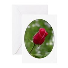 New Beginning Rose<br>Greeting Cards