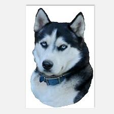 Husky dog Postcards (Package of 8)