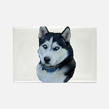 Husky dog Rectangle Magnet