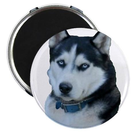"""Husky dog 2.25"""" Magnet (100 pack)"""