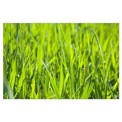 Calgary, Alberta, Canada; Blades Of Grass Poster