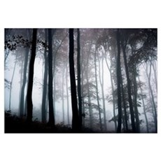Foggy Woods; Ireland Poster