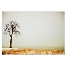Jordan, Ontario, Canada; A Tree Along The Shore Of Framed Print