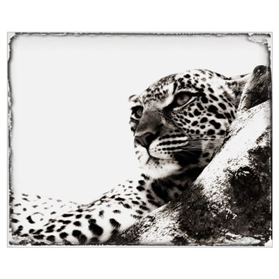 Portrait Of An African Leopard, Botswana, Africa Canvas Art